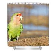 Single Love Bird Seeks Same Shower Curtain