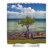 Single Mangrove Tree In The Gulf Shower Curtain