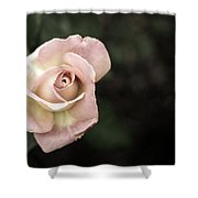 Single Muted Rose Shower Curtain