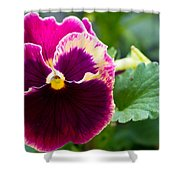 Single Pansy Shower Curtain