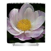 Single Peonie  8444 Shower Curtain