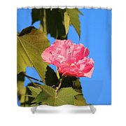 Single Pink Flower Shower Curtain