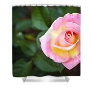 Single Pink Rose Shower Curtain
