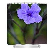 Single Purple Mexican Petunia Ruellia Brittoniana Shower Curtain