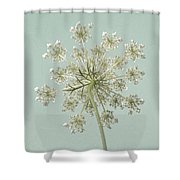 Single Queen Anne's Lace Shower Curtain