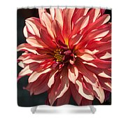 Single Red Bloom Shower Curtain