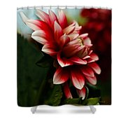 Single Red Dahlia Shower Curtain