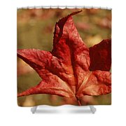 Single Red Maple Leaf Shower Curtain