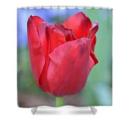 Single Red Tulip Shower Curtain