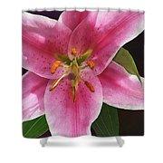 Single Stargazer Lily Shower Curtain
