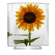 Single Sunflower Shower Curtain
