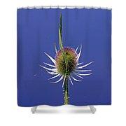 Single Teasel Shower Curtain