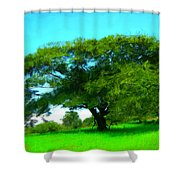 Single Tree In Spring Shower Curtain
