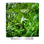 Single Trumpet Shower Curtain