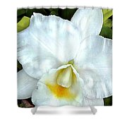 Single White Cattleya Orchid Shower Curtain