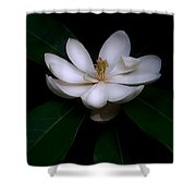 Sweet White Magnolia Bloom Shower Curtain