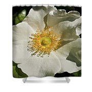 Single White Rose Db Shower Curtain