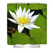 Single White Water Lily Shower Curtain