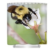 Sipping Nectar Shower Curtain