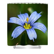Sisyrinchium Angustifolium Shower Curtain