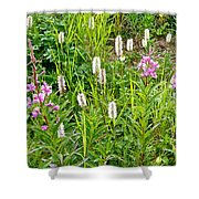 Sitka Burnet And Tall Fireweed In Katmai National Preserve-ak Shower Curtain
