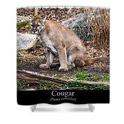 sitting Cougar Shower Curtain
