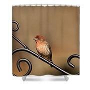 Sitting Pretty Red House Finch Shower Curtain