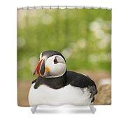 Sitting Puffin Shower Curtain