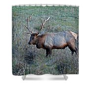 Six By Six Shower Curtain