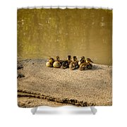 Six Ducklings In A Row Shower Curtain