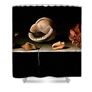 Six Shells On A Stone Shelf Shower Curtain