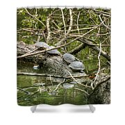 Six Turtle On A Log Shower Curtain