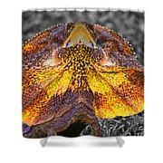 Size Multiplier V2 Shower Curtain