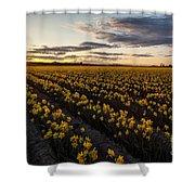 Skagit Daffodils Sunset Sunstar Shower Curtain