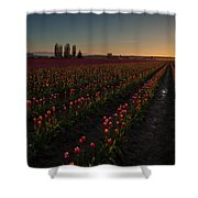 Skagit Dusk Tulip Fields Shower Curtain