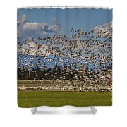 Skagit Snow Geese Liftoff Shower Curtain