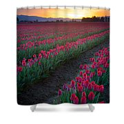 Skagit Valley Blazing Sunrise Shower Curtain
