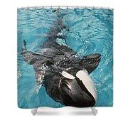 Skana Orca Vancouver Aquarium Pat Hathaway Photo1974 Shower Curtain