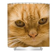 Skc 1483 Unconcerned Stare Shower Curtain
