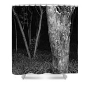 Skc 2975 Thick And Thin Shower Curtain