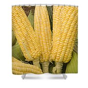 Skc 3270 Take A Bite Shower Curtain