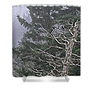 Skeletal Treescape Shower Curtain