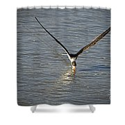 Skimmer Fishing Shower Curtain