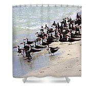 Skimmers On The Beach Shower Curtain by Carol Groenen