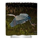 Skimming Great Heron Shower Curtain