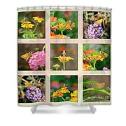 Skipper Butterfly Collage Shower Curtain