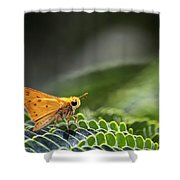 Skipper Butterfly On Mimosa Leaf Shower Curtain