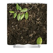 Skc 0091 Fallen And Separated Shower Curtain