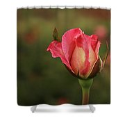 Skc 0422 Blossoming Bud Shower Curtain