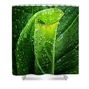 Skunk Cabbage Shower Curtain